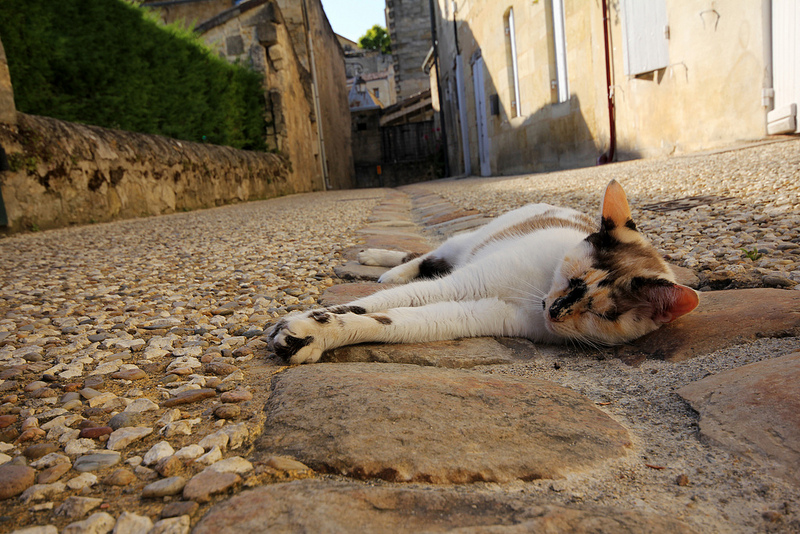 A French cat.